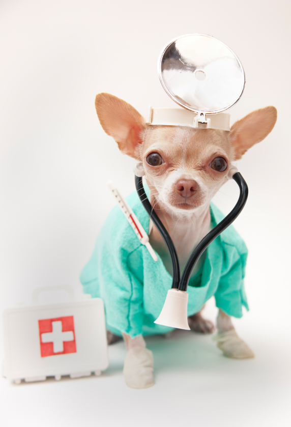 dr-dog1.jpg
