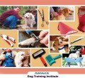 Grooming Your Dag At Home - The Ultimate Guide